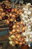 Hanging crop of red and yellow onion and white garlic Stock Photography