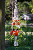Hanging devil's ivy plant Stock Photos