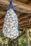 Hanging dried garlic in nylon net bag. At a market stock photo