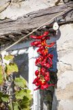 Hanging dried red peppers Stock Photos