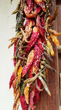 Hanging dried red peppers Stock Images