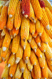 Hanging Dry corn cob Stock Photos