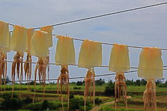 Hanging drying squid. Drying squid hanging on the side of the road in Jeju, South Korea Royalty Free Stock Photos