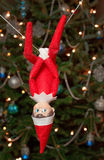 Hanging Elf. Tinsel the elf with the christmas tree in the background Royalty Free Stock Photos