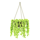 Hanging exotic pot  solated Royalty Free Stock Photography