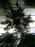 Hanging fern silhouette Royalty Free Stock Photos