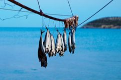 Hanging fish. Freshly caught fish hanging from a pole by the water Royalty Free Stock Photos