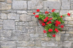 Hanging Flower Basket Royalty Free Stock Photo