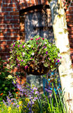 A hanging flower basket in the garden. A hanging flower basket in the garden, a great way for garden landscaping Royalty Free Stock Images