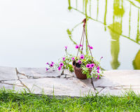 Hanging Flower Basket outdoors Stock Photography