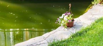 Hanging Flower Basket outdoors Stock Images