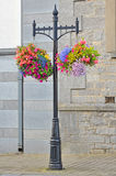 Hanging Flower Basket Stock Photo