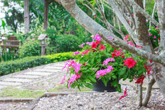 Hanging flower baskets. In the beautiful garden Royalty Free Stock Image