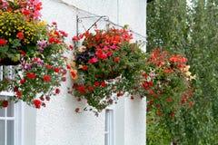Hanging flower baskets Royalty Free Stock Photo