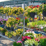 Hanging Flower baskets in Garden Center Stock Photography
