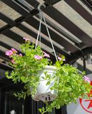 Hanging flower baskets Royalty Free Stock Images