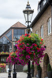 Hanging Flower Baskets Stock Photography