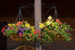 Hanging flower baskets Stock Photos