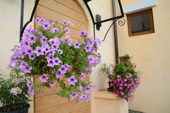 Hanging flower Stock Photo