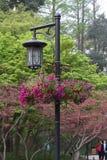 Hanging flower lamp Royalty Free Stock Image