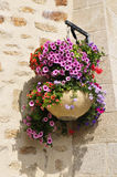 Hanging flower pot Stock Image
