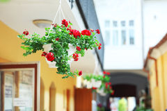 Hanging flower pot Stock Photography