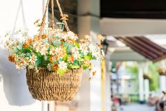 hanging flower pot stock photo