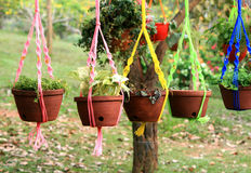 Hanging flower pots. With colorful ropes in a garden Stock Photography