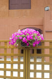 Hanging Flower Pots. Royalty Free Stock Images