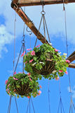 Hanging flower in the pots Royalty Free Stock Images