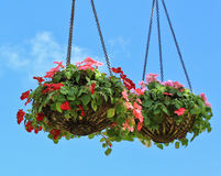 Hanging flower in the pots Stock Photos