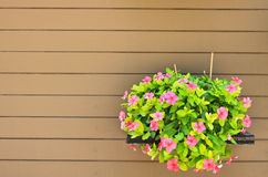 Hanging flower on wood wall Royalty Free Stock Photo