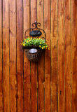 Hanging flower on wood wall Stock Photos