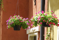Hanging Flowerpot. With the detail stock photos