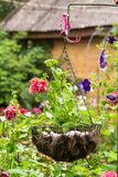 Hanging flowerpot with bright pink petunias. stock photo