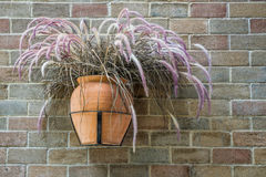 Hanging flowerpot of dry Pennisetum on a bick wall Royalty Free Stock Photography