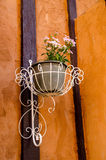 Hanging flowerpot. On the orange wall stock photos