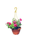 Hanging flowerpot with pink flowers of petunia Royalty Free Stock Photos