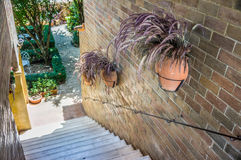 Hanging flowerpots of dry Pennisetum on a bick wall Stock Photos