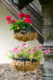 Hanging flowerpots with fresh flowers Royalty Free Stock Images