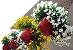 Hanging flowerpots with viola Stock Photos