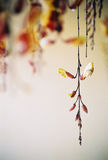 Hanging flowers royalty free stock photography