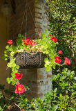 Hanging flowers Stock Photography