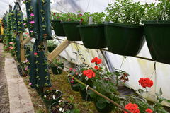 Hanging flowers and plants. In hanging baskets and hanging plastic bags royalty free stock photo