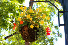 Hanging Flowers on the Plazq. Flowers hang from a lamp post on the plaza Stock Images