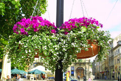 Hanging flowers on a street Stock Photo