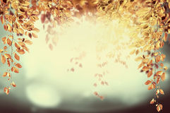 Hanging foliage branch in sunshine , autumn background. Pastel toned Stock Photo