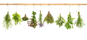 Hanging fresh herbs basil, sage, thyme, dill, mint, lavender. Fresh herbs hanging isolated on white background. Bundle of basil, sage, thyme, dill, mint Stock Photos