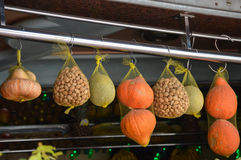 Hanging. Fruit and nuts hanging in a window royalty free stock image