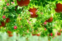 Hanging garden Stock Image